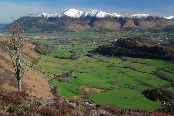 Skiddaw from Flanks of Rowling End.