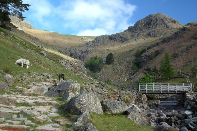 Looking up Stickle Ghyll.